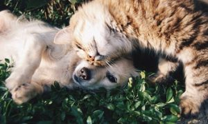Happy pet cat and pet dog together.