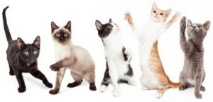 Active cats, Cat breeds for active families, cats good with kids