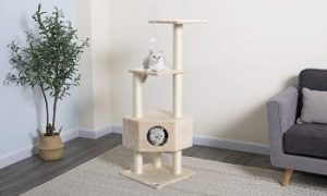 Go Pet Club Cat Tree Condo on first level, cat gym, cat tower
