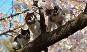 Cats can eat, poisonous plants for cats, Bengal Cat