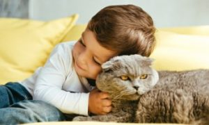 Cuddling a pet cat, Petting your cat, Where do cats like to be pet?