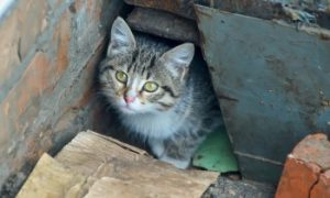 Missing cat under a house, Missing Cat, Lost Cat