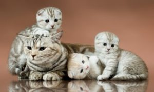 mother cat and kittens, cat's heat cycle, is my cat in heat