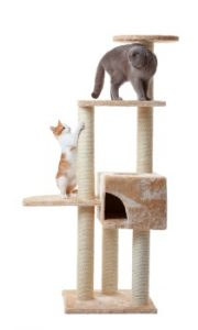Cats exercising on a cat tree, cat tree with cat condo, bored cat