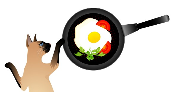 Can cats eat cooked eggs?, Can cats eat eggs?, Cats and eggs