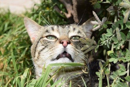Cat sniffing, cat olfactory system, WHat do cats hate the smell of?