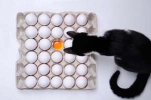 Can cats eat eggs?, cat food, Can cats eat cooked eggs?